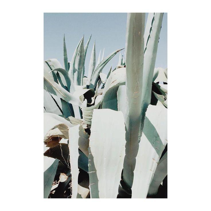 #pieks cactus, minimal