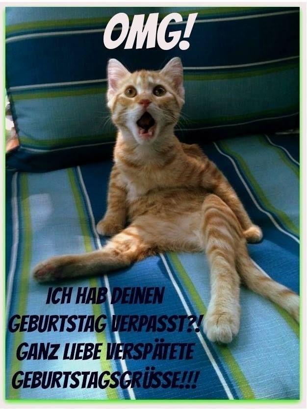 Bildergebnis Für Nachträglich Zum Geburtstag Katze Geburtstag