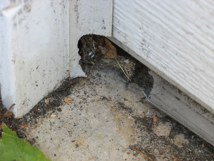 Rodents chewed hole in corner of garage door.   Rodents ...