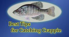 Best Crappie Fishing Tips - I have tried to compile here my best crappie fishing tips. There are a lot of ways of crappie fishing. Every fisherman has his or her own favorite techniques to catch this beloved fish. Why is crappie so beloved? Well, they give one heck of a fight when caught. A 2 lb. crappie can put up a fight to rival a bass of larger size. #crappiefishingtips #bestcrappiefishingtips #bestcrappiefishing #crappiefishing #crappie #fishing