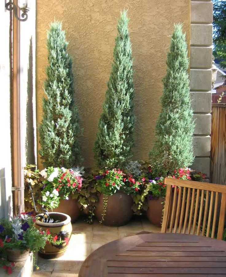 Tuscan House Style With Front Walkway And Italian Cypress: 25+ Best Ideas About Potted Trees On Pinterest