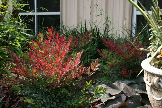 248 best landscape gardening plants images on pinterest native top 10 greenwall plants for south australia altavistaventures Gallery
