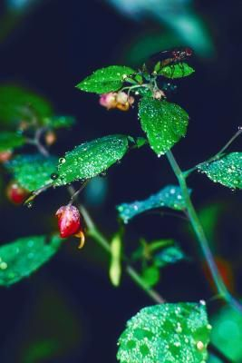 how to kill gnats that live in plants