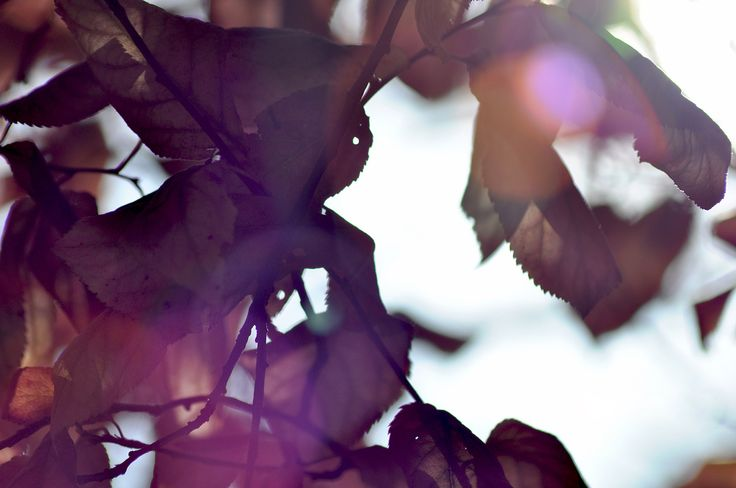 Abstract , essential autumn leafs ! #autumn #leafs #nature #abstract