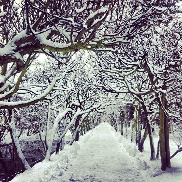 Magical Park Oliwski #gdansk #igersgdansk #zima #winter #poland (w: Park Oliwski)