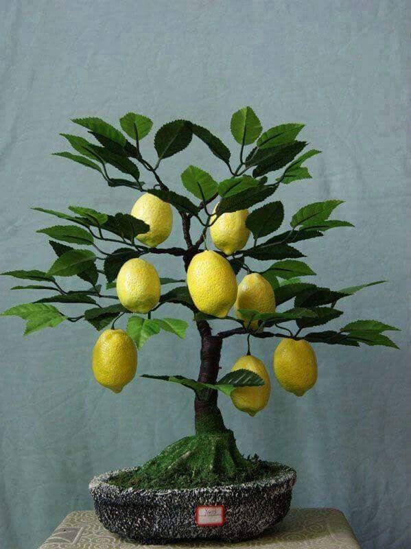 Little tree bears plenty of fruit