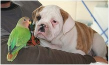 thyra and our lovebird