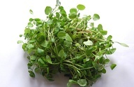 Watercress is used as a remedy for the treatment of canker sores, mouth blisters, bad breath, woollen gums, headaches, nervousness, hot flashes, eczema and dermatitis. Watercress can also be beneficial in clearing the mucous congestion and eliminating the body fluids in the tissues such as in gout.