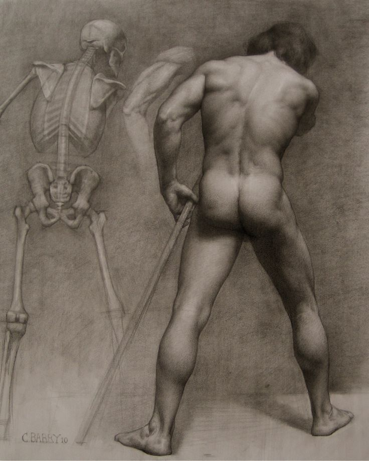 Male anatomy of john with skeleton by colleen barry b graphite on paper nude figure study