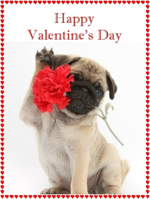 42 best images about PUG VALENTINE CARDS – Saint Valentine Card