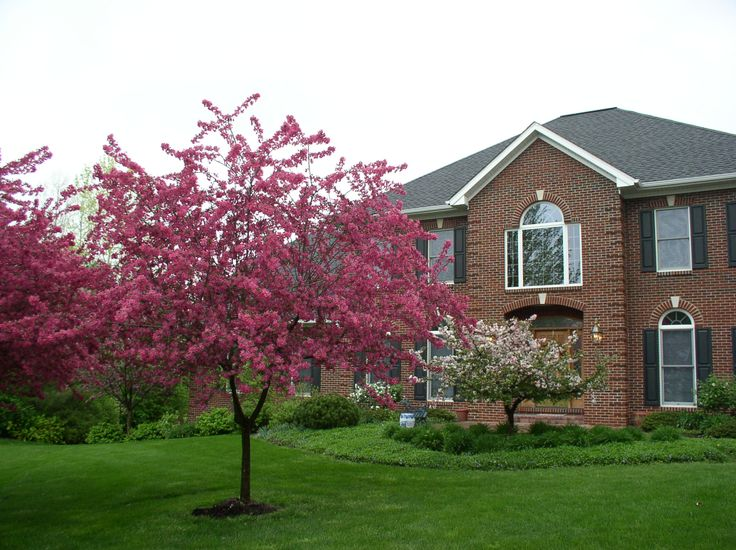 Small ornamental trees ornamental trees yard for Ornamental grass front yard