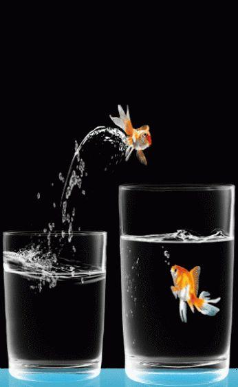 ♥ Goldfish GIF