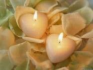 Petals and Hearts