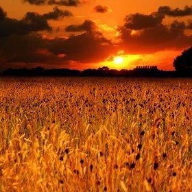 Autumn field of joy