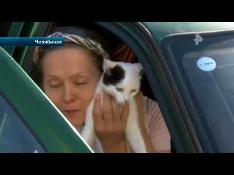 В Челябинске две кошки едва не погибли, оставшись в салоне легковушки на...