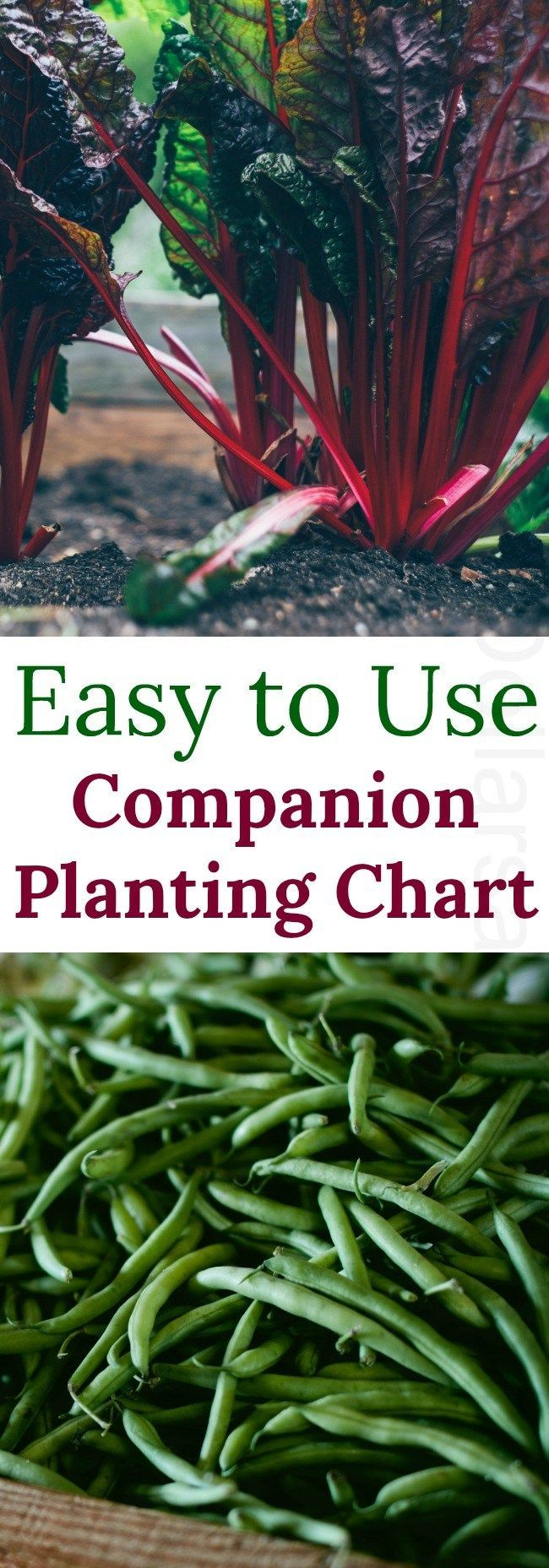 Companion Planting Chart {Carrots love Tomatoes u2013 One of my favorite garden…