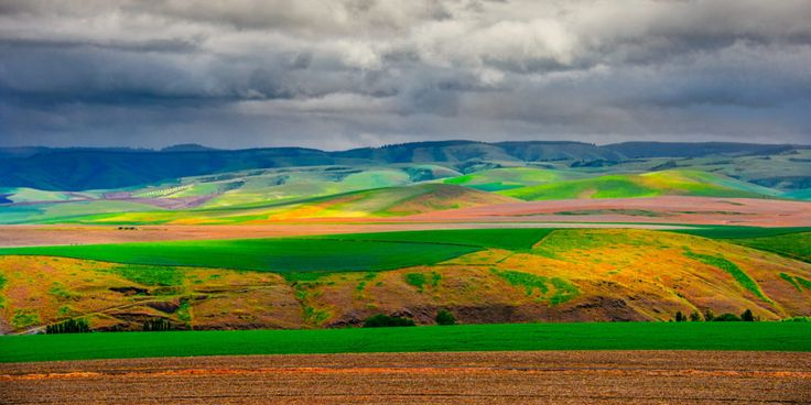 Palouse Hills from Steptoe Butte - This view of the rolling Palouse hills was taken from the access road to Steptoe Butte in Steptoe Butte State Park near Colfax, Washington.