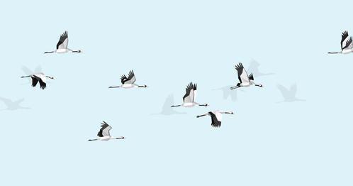 FLIGHT OF CRANES by Jana Michalovic