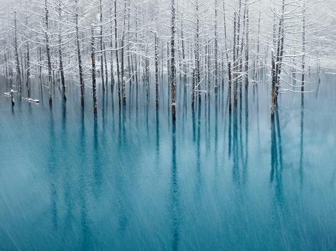 北海道 美瑛町 「青い池」