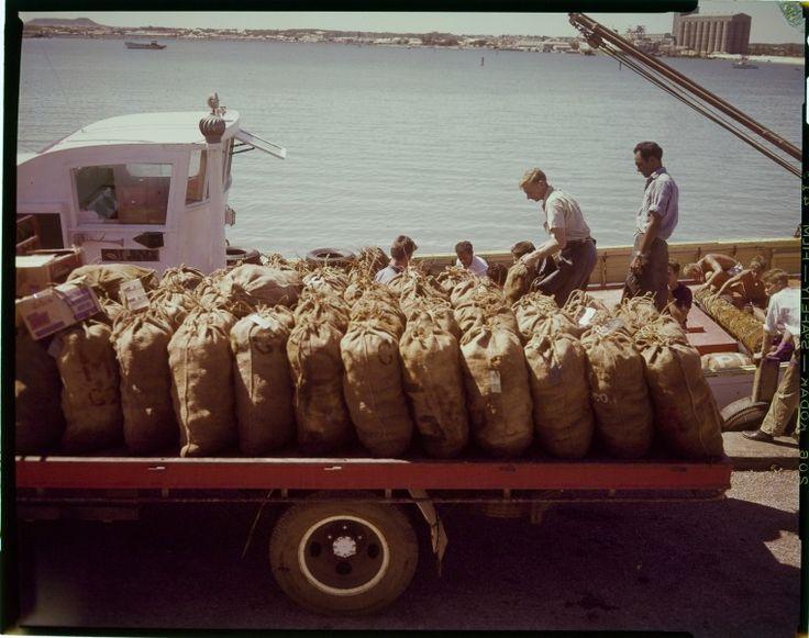 228009PD: Unloading western rock lobsters at Geraldton Harbour, ca. 1962. https://encore.slwa.wa.gov.au/iii/encore/record/C__Rb3756219