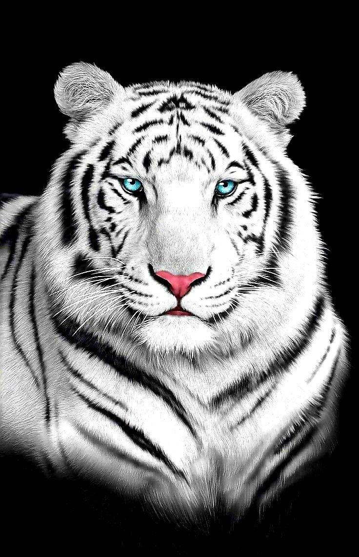 Stunning Portrait Of White Tiger Amazinganimals Amazingtigers Tigersworld Savetigers Rareanimals End Tiger Spirit Animal Tiger Photography Tiger Artwork
