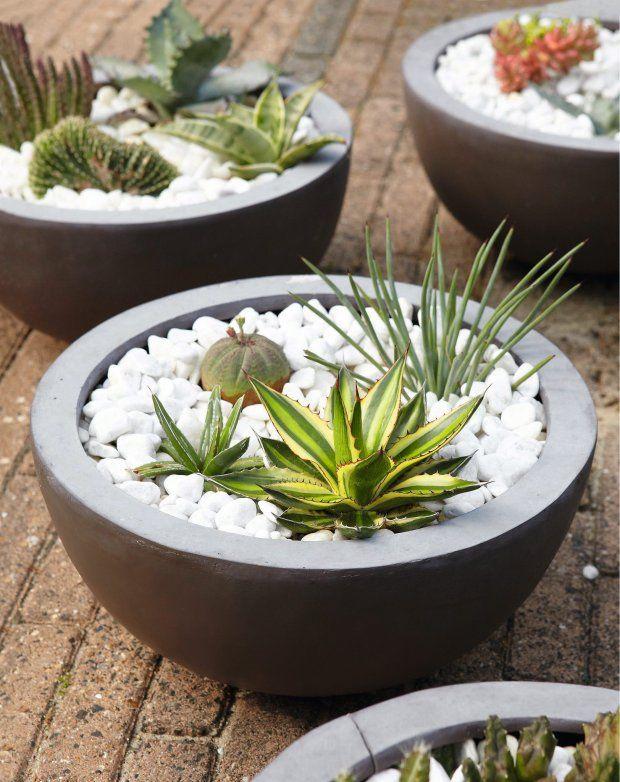 Kaktusy i sukulenty: pustynne kompozycje w doniczce.