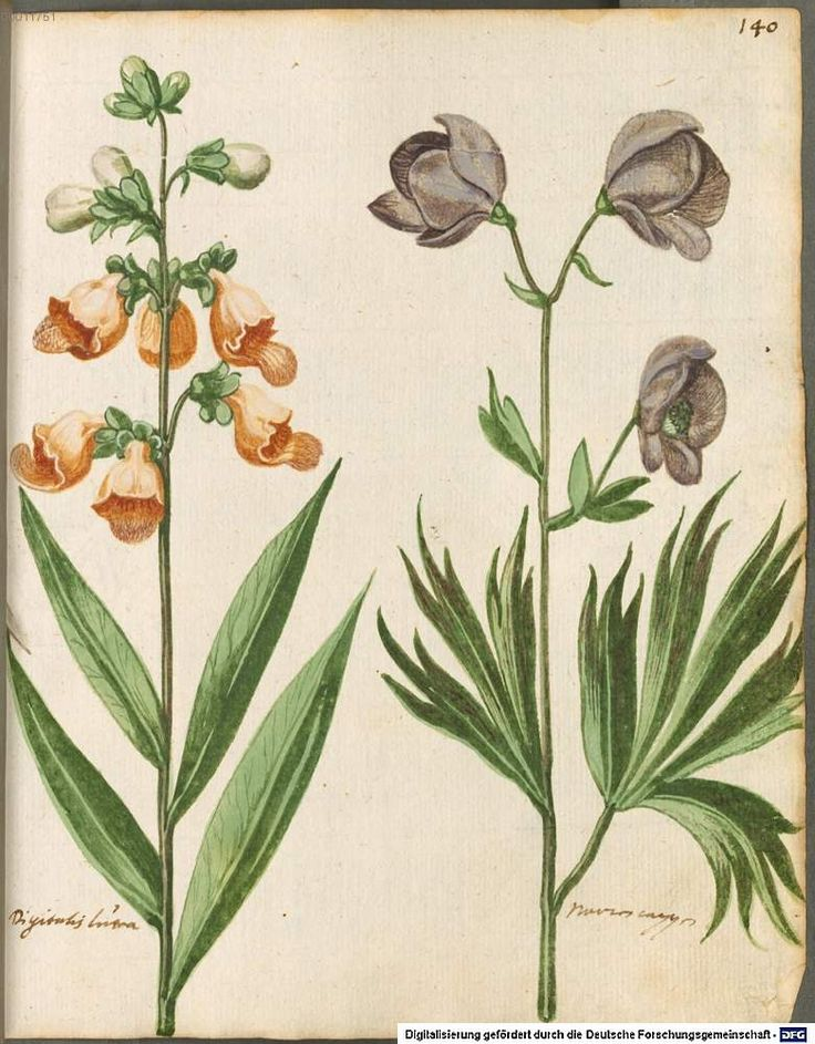 Hortulus Monheimensis -- commissioned in 1615 by Wolfgang P Brandt -- via peacay
