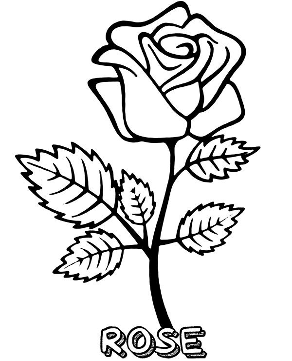 Blooming Rose Coloring Page Rose Coloring Pages Flower Coloring Pages Owl Coloring Pages