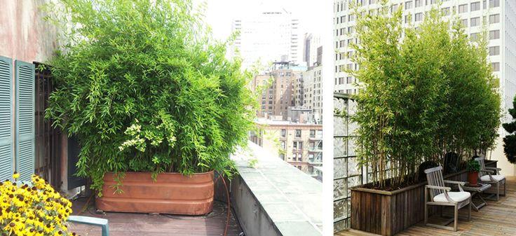 17 beste idee n over groene tuin op pinterest tuinplanten landschapsontwerp en wijnstokken - Bamboe in bakken terras ...