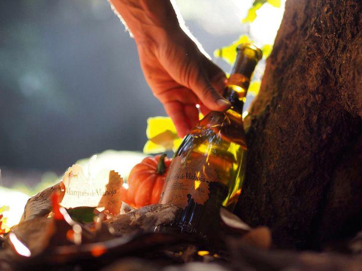 Marqués de Vizhoja; nuestro vino blanco gallego para disfrutar del otoño