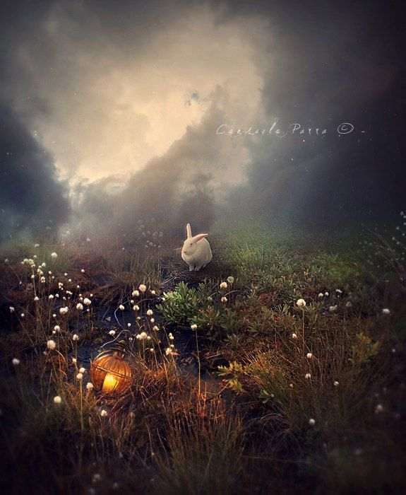 кролик в ночи