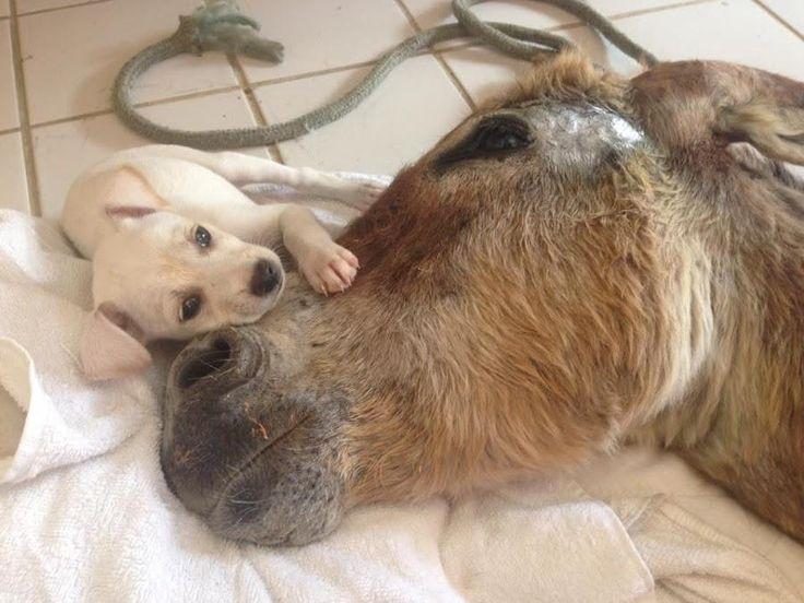 Con tan solo unos meses de edad, este burro ya sabe lo cruel que puede ser el mundo :(