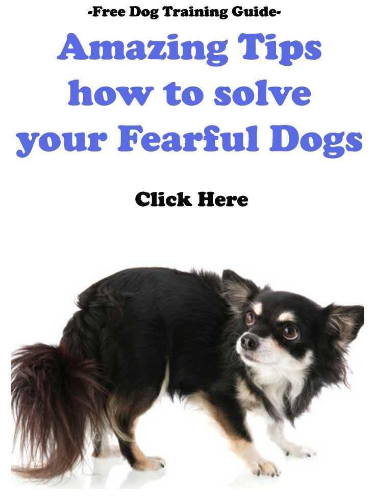 Amazing Tips How To Solve Your Fearful Dogs Dog Training Dog
