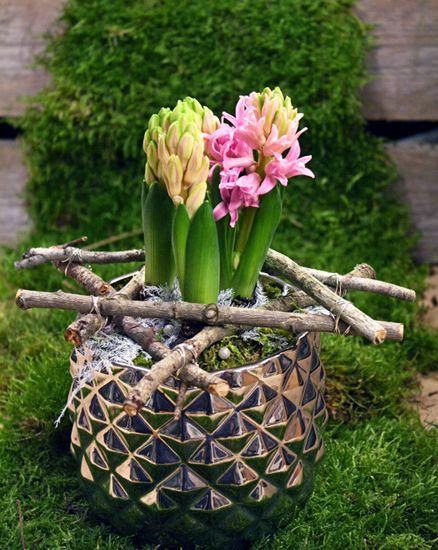 http://holmsundsblommor.blogspot.se/2012/12/stjarnhyacint.html Hyacint med stjärna av pinnar