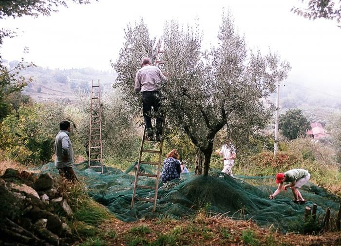 The Italian Job: A Vacation Villa, Olive Grove Included