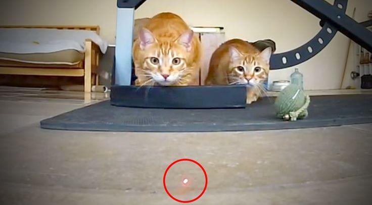 Fogtam a fejem, olyan hihetetlenek! :D Ezek a macsekok igazi lehetetlen küldetést találtak maguknak, vajon sikerül elkapniuk az elkaphatatlant