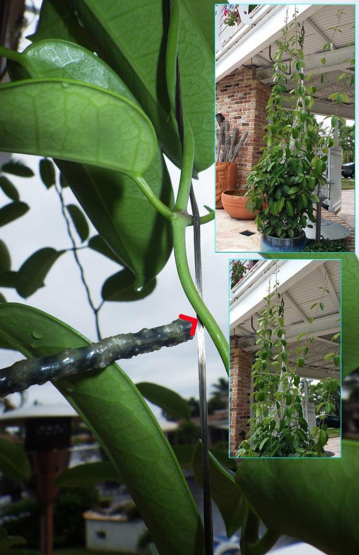 Energetických surovín CORP - Trellis a rastlín Vinnig