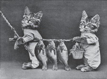 13 самых старых фотографий забавных котов
