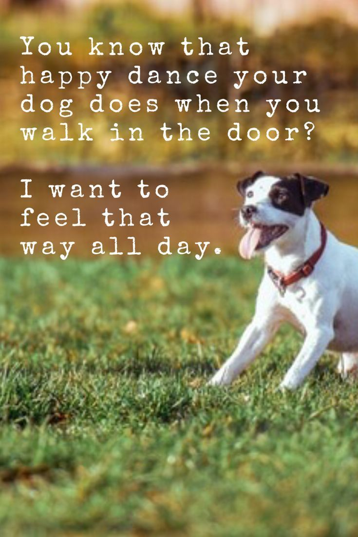 You Know That Happy Dance Your Dog Does When You Get Home I Wish