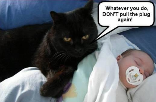 Whaaayyy!!!: Plugs, Cat, Pet, Quiet Time, Funny Stuff, Humor, Funny Animal Photos, Baby, So Funny