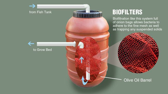 Biofilter for aquaponics: The biological filter, or biofilter, is a key component in the filtration portion of a recirculating aquaculture system (RAS). The biofilter houses the nitrifying bacteria and is the primary site where biological nitrification occurs. Common dish scrubber pads can also make excellent biofilter material. Download fact sheet at link.