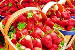 Paket Wisata Kebung Strawberry