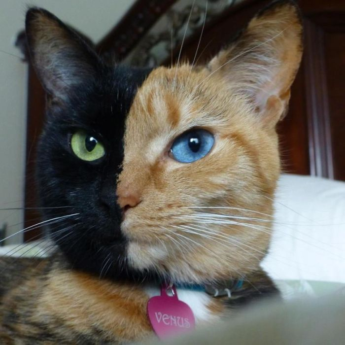 STRANGE ANIMAL PICTURES - CAT HAS SPLIT COLOR ON FACE ...
