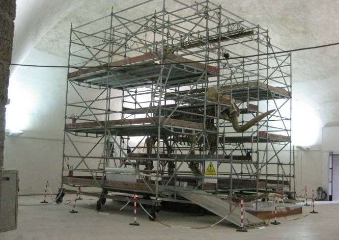 Restauro Mammuthus Meridionalis. Fortezza Spagnola - L'Aquila.  #mammuth