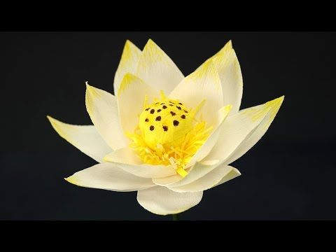 Paper Flower Craft - How to Make Paper Lotus Flower - YouTube