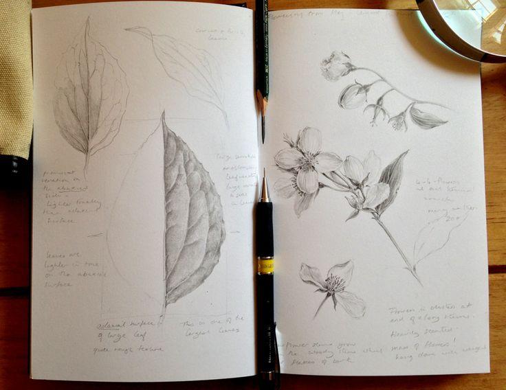 Botanical Sketchbook Collective