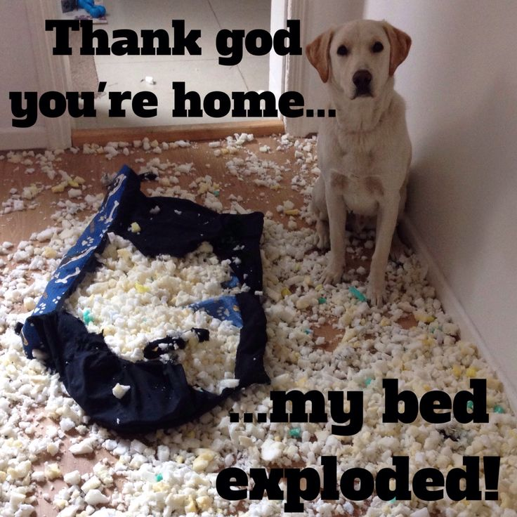 Quot Thank God You Re Home My Bed Exploded Quot Naughty Pup