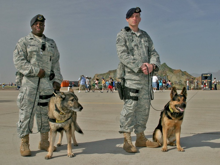 18 Best Images About Usaf K9 On Pinterest Soldiers