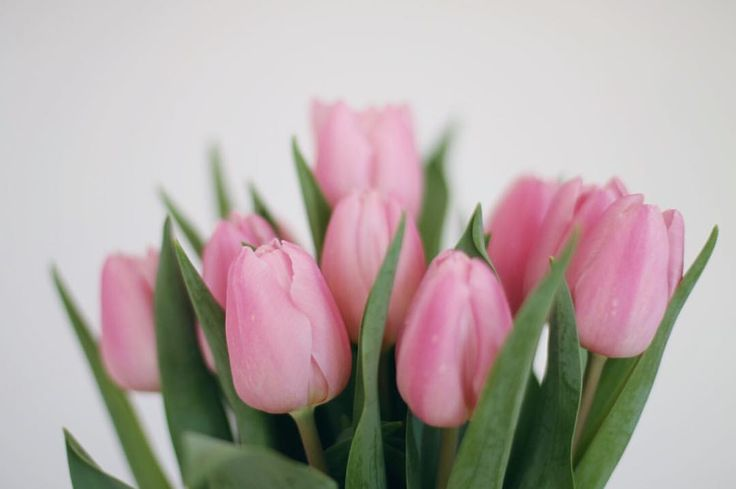 """Mi piace"": 118, commenti: 5 - Lucia Massimino (@lucia_massimino) su Instagram: ""Weekend is almost here and my beautiful tulips are blooming ✌🏻 There can never be too many flowers…"""