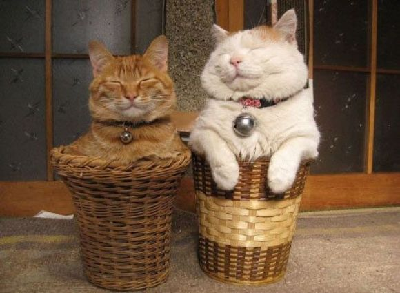 Two Cute Cats | Cutest Paw
